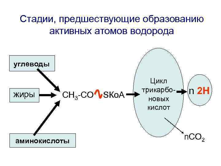 Стадии, предшествующие образованию  активных атомов водорода  углеводы