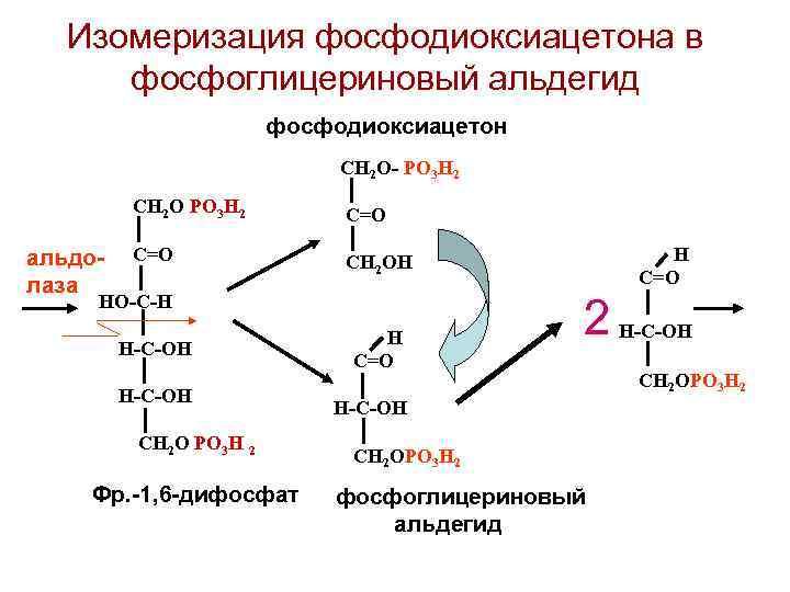 Изомеризация фосфодиоксиацетона в  фосфоглицериновый альдегид     фосфодиоксиацетон