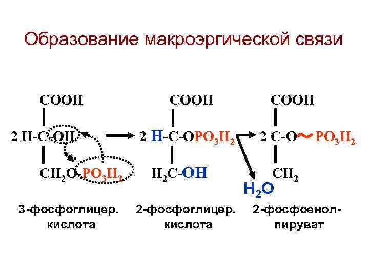 Образование макроэргической связи СООН 2 Н-С-ОН   2 Н-С-ОРО 3 Н 2
