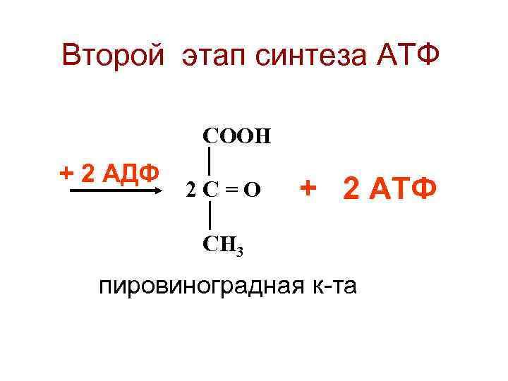 Второй этап синтеза АТФ  СООН + 2 АДФ  2 С=О  +
