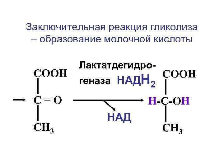 Заключительная реакция гликолиза – образование молочной кислоты  Лактатдегидро- СООН   геназа НАДН