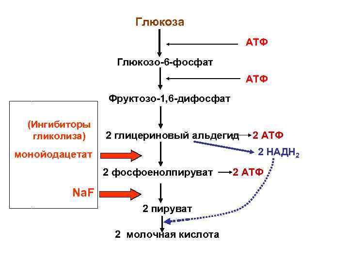 Глюкоза    АТФ    Глюкозо-6