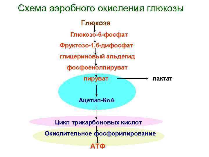 Схема аэробного окисления глюкозы    Глюкоза  Глюкозо-6 -фосфат   Фруктозо-1,