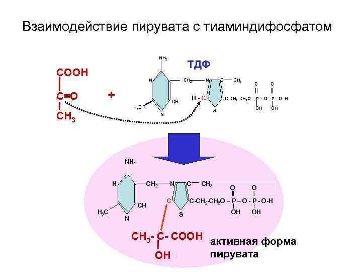 Взаимодействие пирувата с тиаминдифосфатом       NH 2