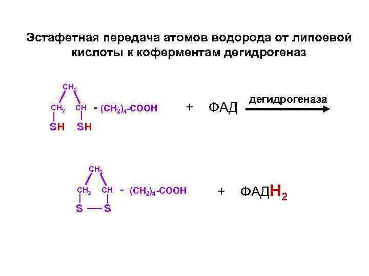Эстафетная передача атомов водорода от липоевой  кислоты к коферментам дегидрогеназ  CH 2