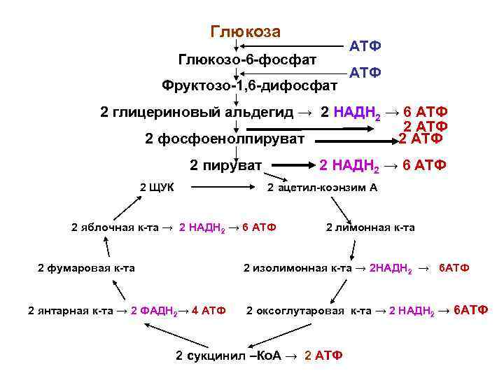 Глюкоза     АТФ