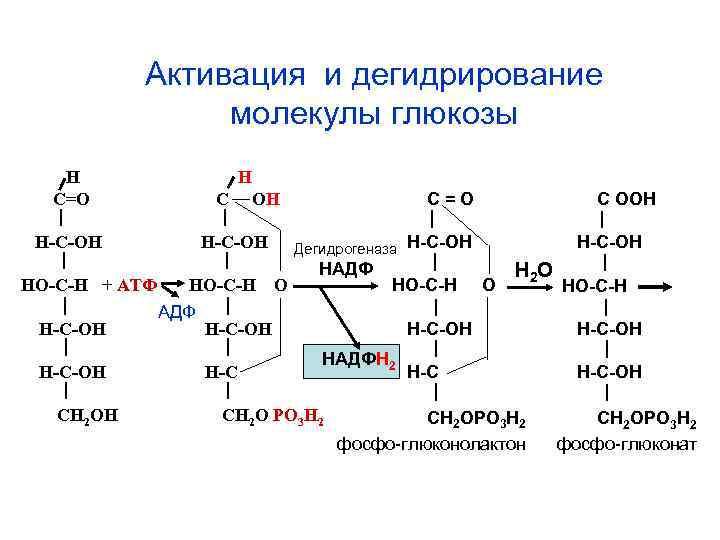 Активация и дегидрирование   молекулы глюкозы  Н  С=О