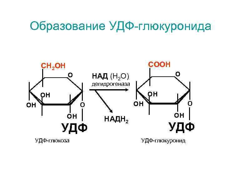 Образование УДФ-глюкуронида  СН 2 ОН       СООН
