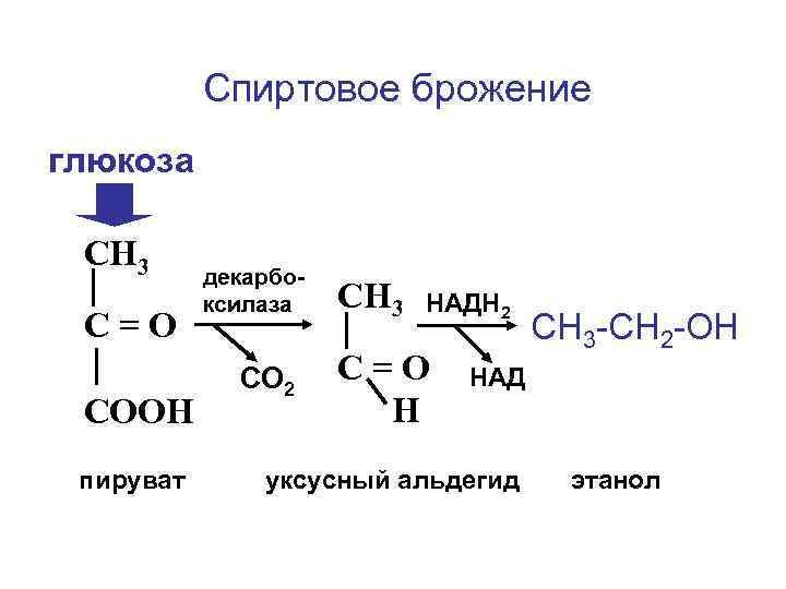 Спиртовое брожение глюкоза  СН 3  декарбо-  ксилаза  СН