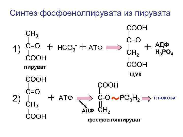 Синтез фосфоенолпирувата из пирувата       СООН СН 3