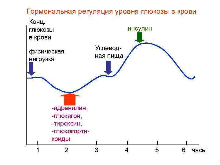 Гормональная регуляция уровня глюкозы в крови Конц. глюкозы     инсулин в