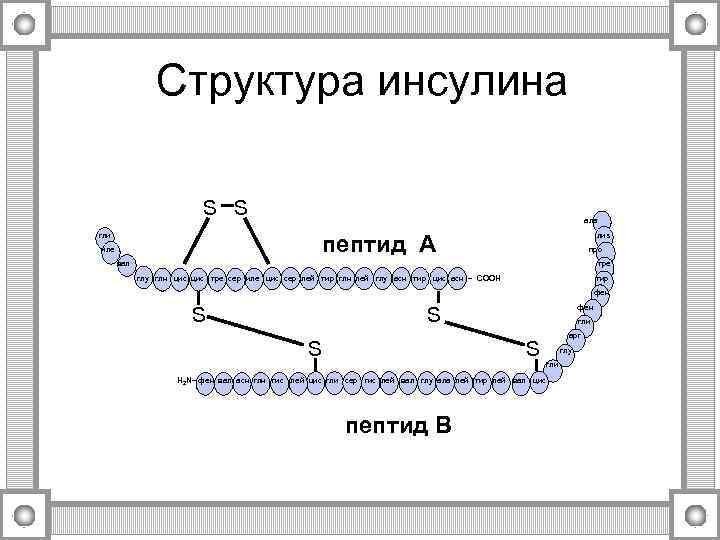 Структура инсулина      S S