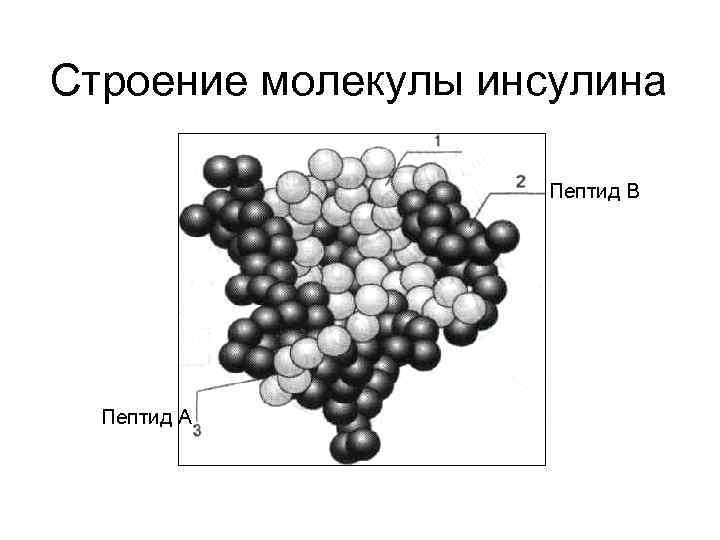 Строение молекулы инсулина     Пептид В  Пептид А