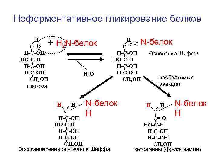 Неферментативное гликирование белков  Н С=О + Н 2 N-белок    Н