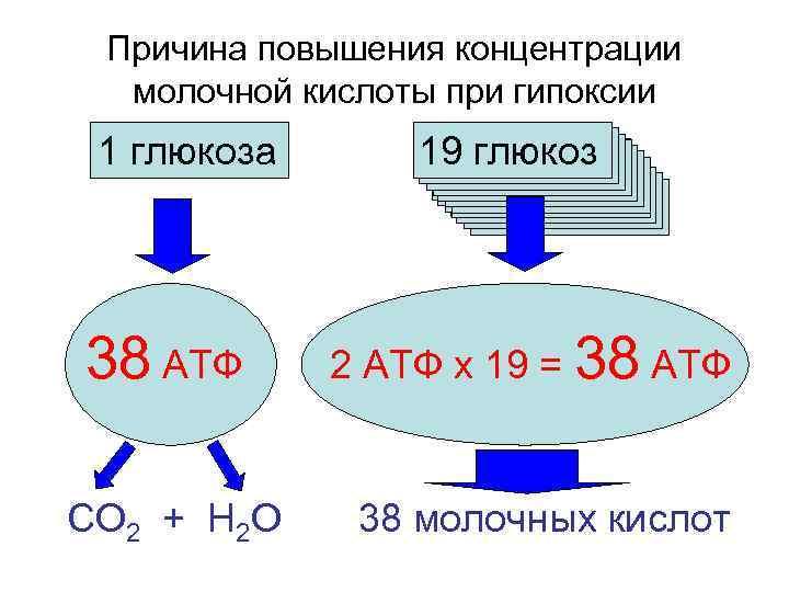 Причина повышения концентрации  молочной кислоты при гипоксии 1 глюкоза  19 глюкоз