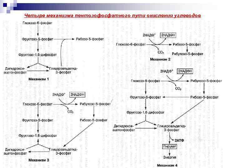 Четыре механизма пентозофосфатного пути окисления углеводов