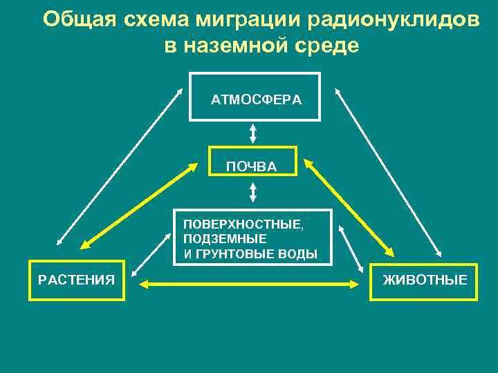 Общая схема миграции радионуклидов   в наземной среде    АТМОСФЕРА