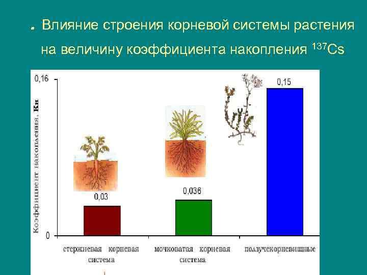 . Влияние строения корневой системы растения на величину коэффициента накопления 137 Cs