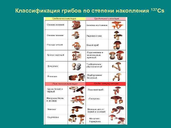 Классификация грибов по степени накопления 137 Cs