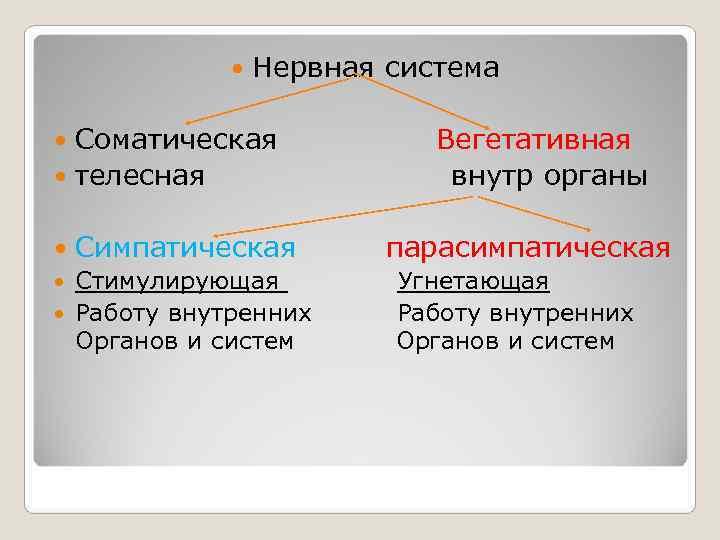 Нервная система  Соматическая   Вегетативная  телесная