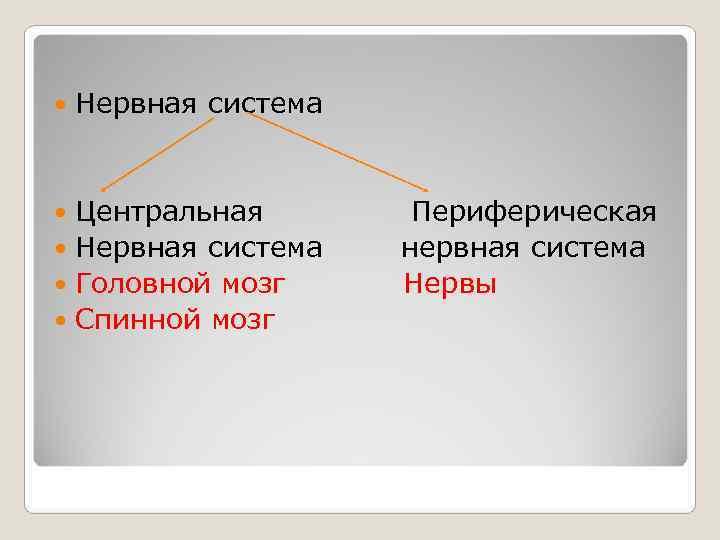 Нервная система Центральная   Периферическая  Нервная система нервная система