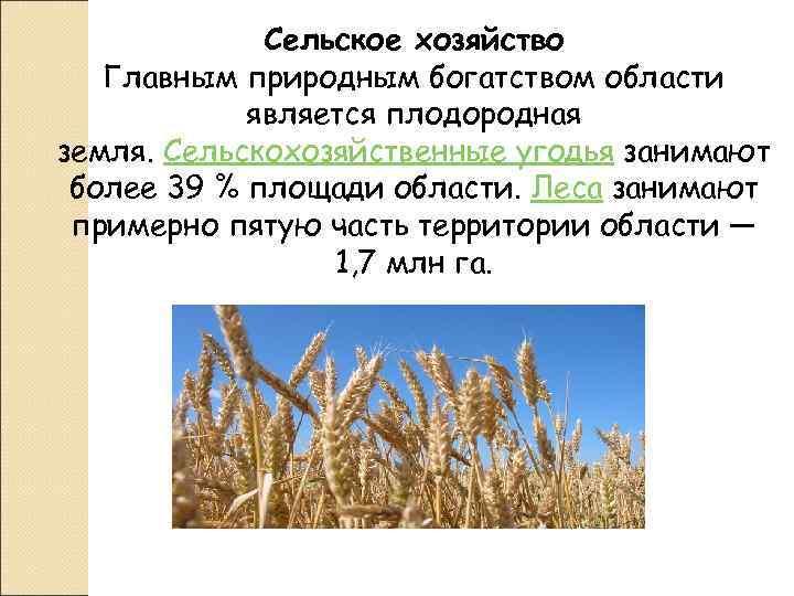Сельское хозяйство  Главным природным богатством области   является плодородная