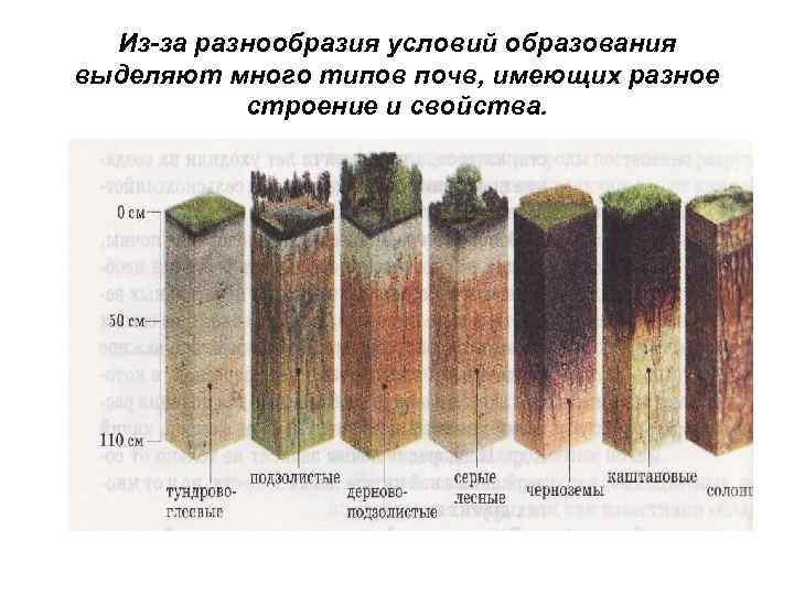 Из-за разнообразия условий образования выделяют много типов почв, имеющих разное  строение и
