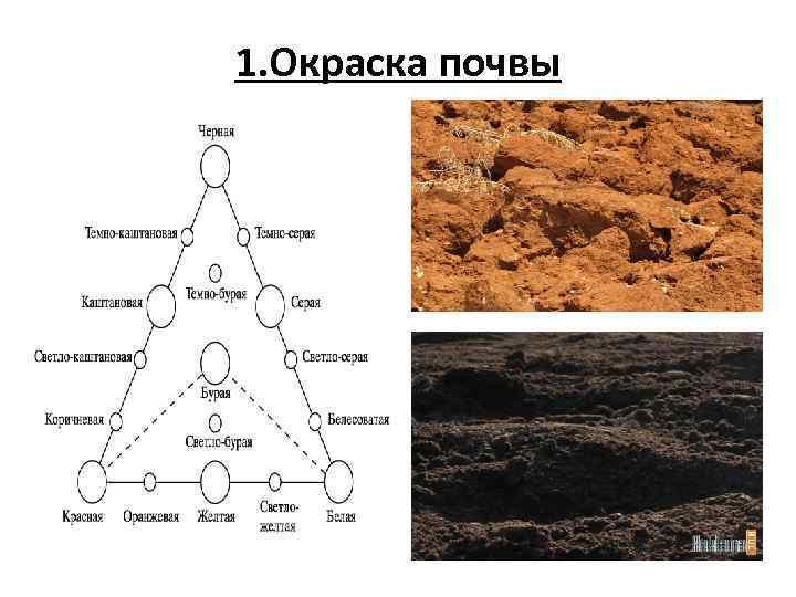 1. Окраска почвы