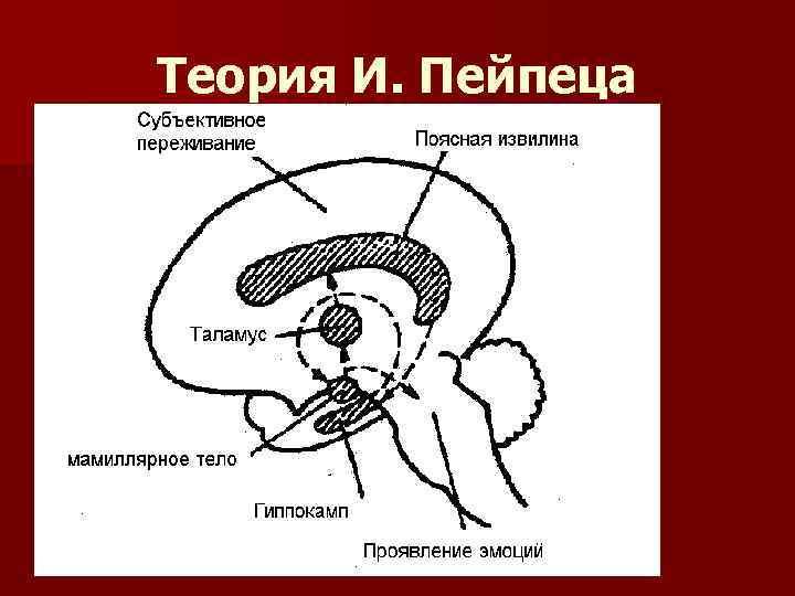 Теория И. Пейпеца