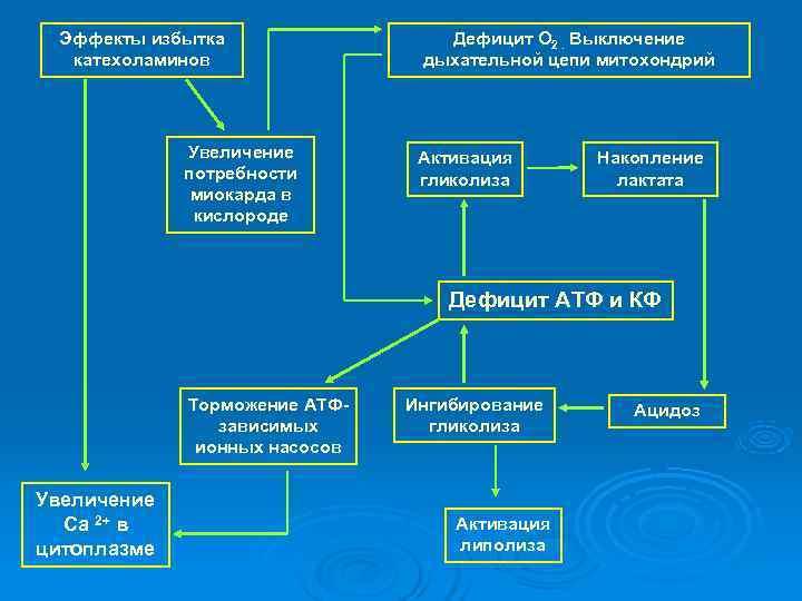 Эффекты избытка   Дефицит О 2. Выключение  катехоламинов   дыхательной