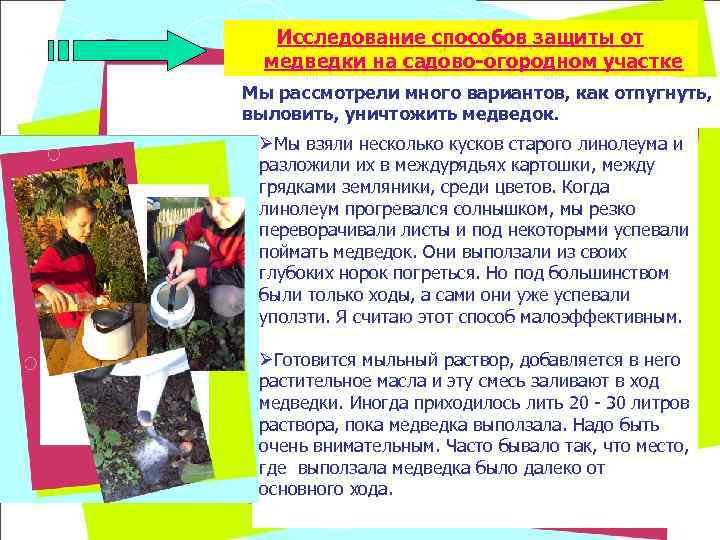 Исследование способов защиты от  медведки на садово-огородном участке Мы рассмотрели много