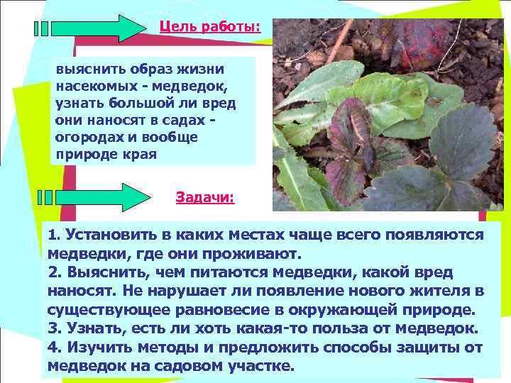 Цель работы:  выяснить образ жизни насекомых - медведок, узнать большой