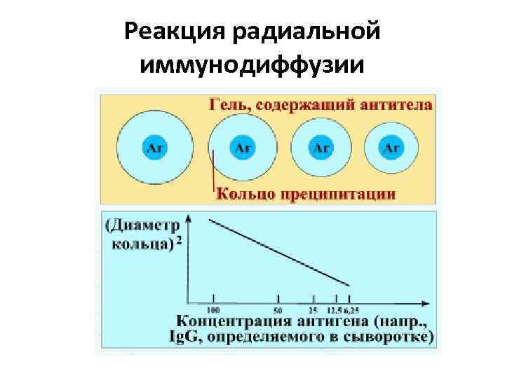 Реакция радиальной иммунодиффузии