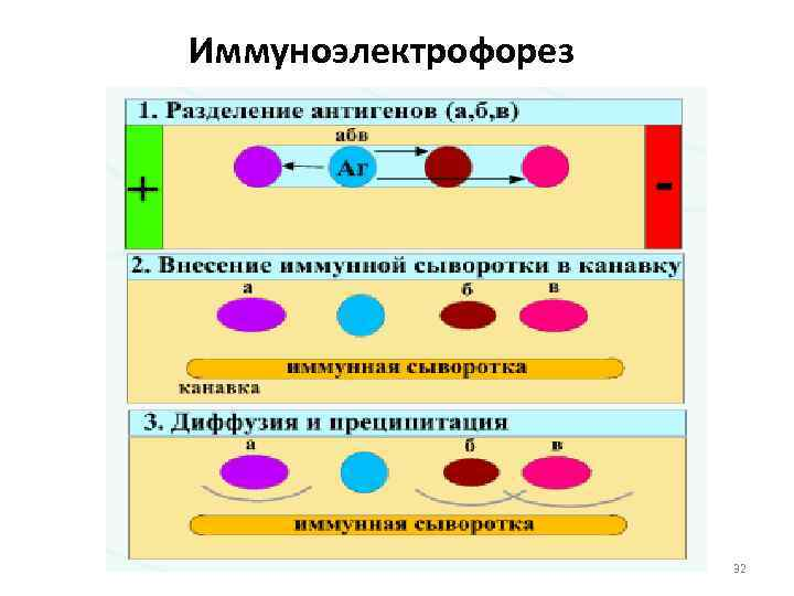 Иммуноэлектрофорез     32