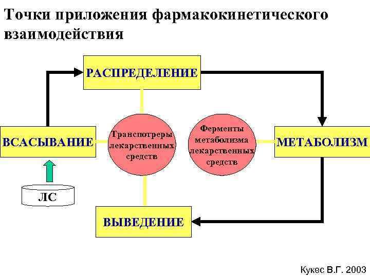 Точки приложения фармакокинетического взаимодействия  РАСПРЕДЕЛЕНИЕ      Ферменты