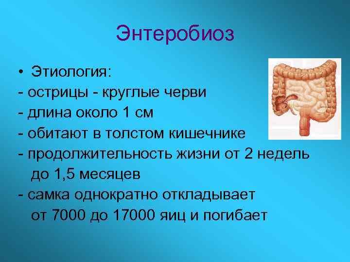 Энтеробиоз • Этиология: - острицы - круглые черви - длина около 1