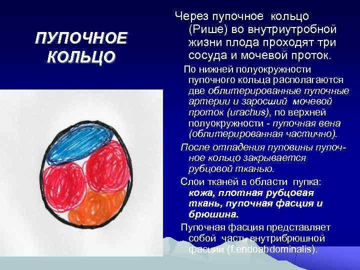 Через пупочное кольцо   (Рише) во внутриутробной ПУПОЧНОЕ жизни плода проходят