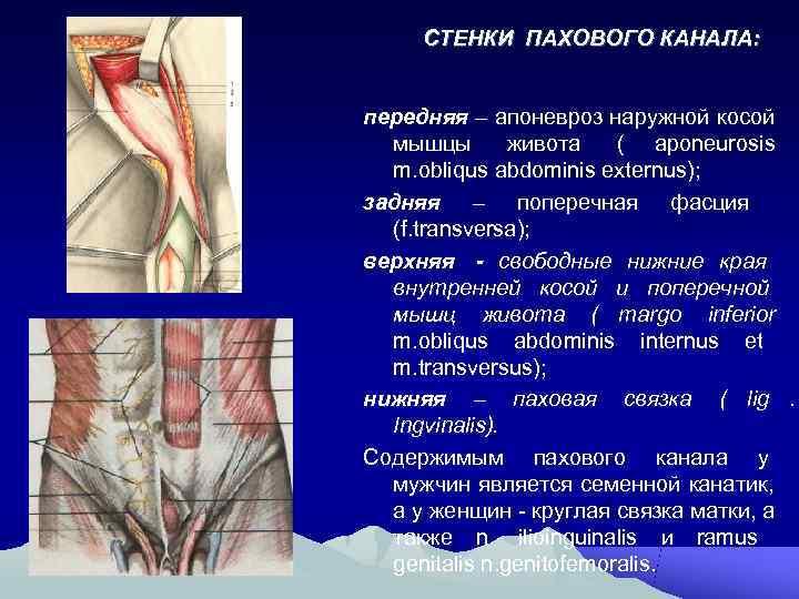 СТЕНКИ ПАХОВОГО КАНАЛА:  передняя – апоневроз наружной косой  мышцы  живота