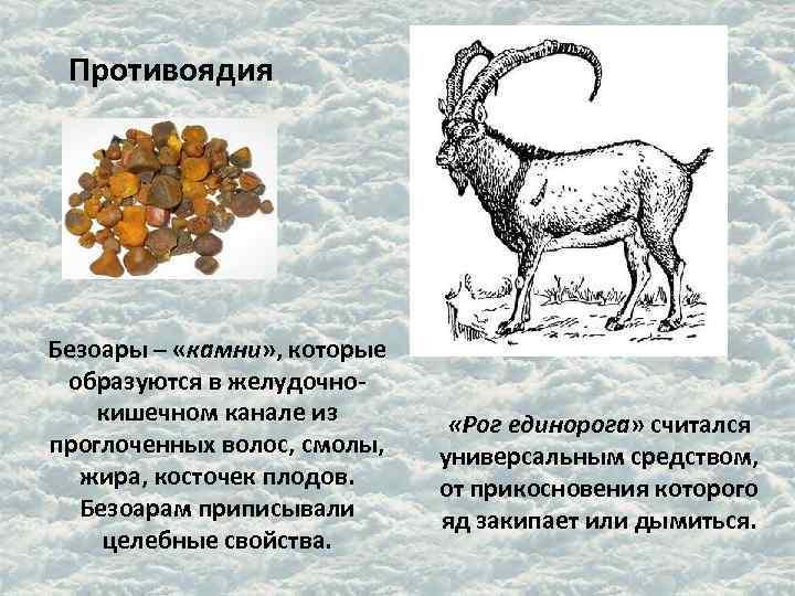 Противоядия Безоары – «камни» , которые  образуются в желудочно- кишечном канале из