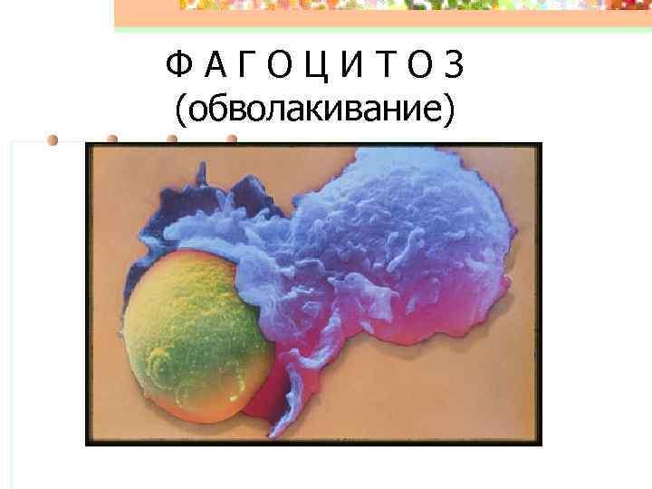 ФАГОЦИТОЗ (обволакивание)