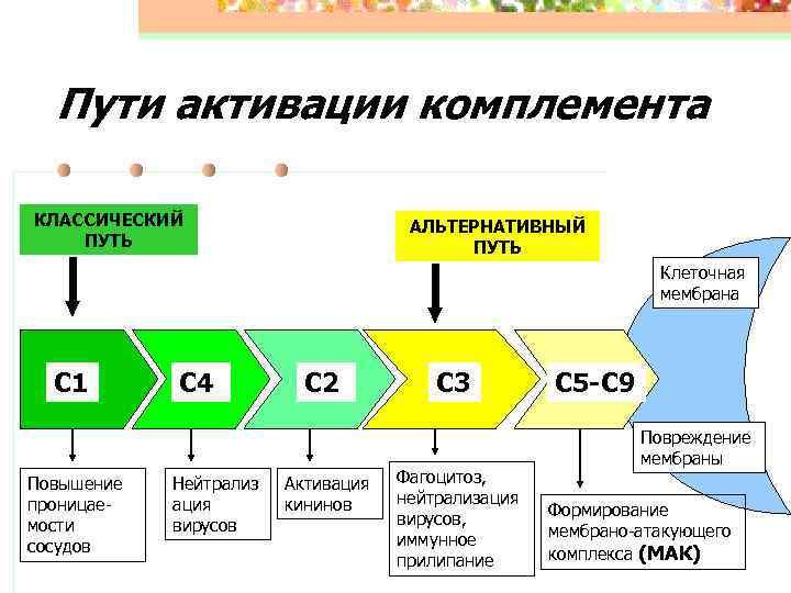 Пути активации комплемента КЛАССИЧЕСКИЙ     АЛЬТЕРНАТИВНЫЙ ПУТЬ
