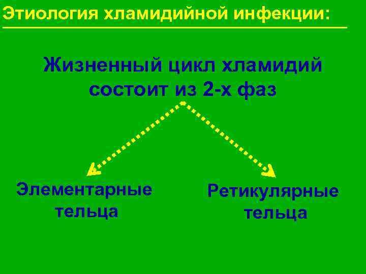 Этиология хламидийной инфекции: Жизненный цикл хламидий  состоит из 2 -х фаз Элементарные Ретикулярные