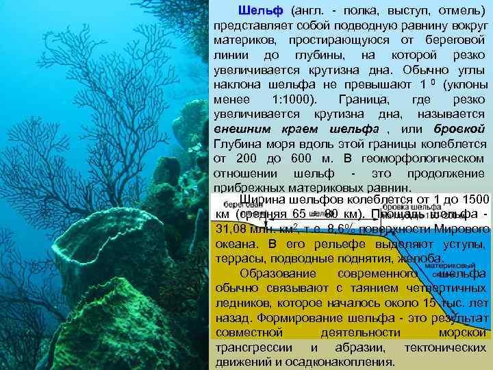 Шельф (англ. - полка, выступ, отмель) представляет собой подводную равнину вокруг материков,
