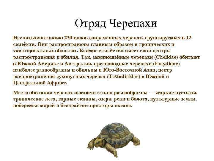 Отряд Черепахи Насчитывают около 230 видов современных черепах, группируемых в