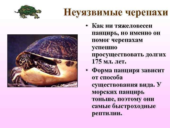 Неуязвимые черепахи • Как ни тяжеловесен  панцирь, но именно он  помог черепахам
