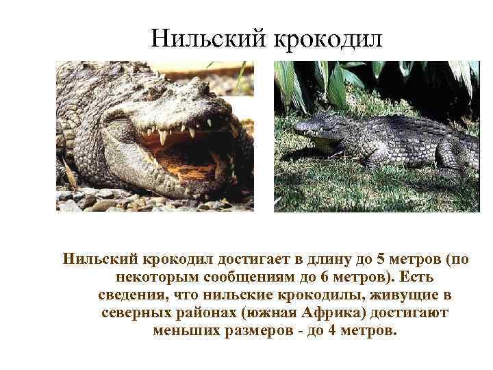 Нильский крокодил достигает в длину до 5 метров (по  некоторым сообщениям