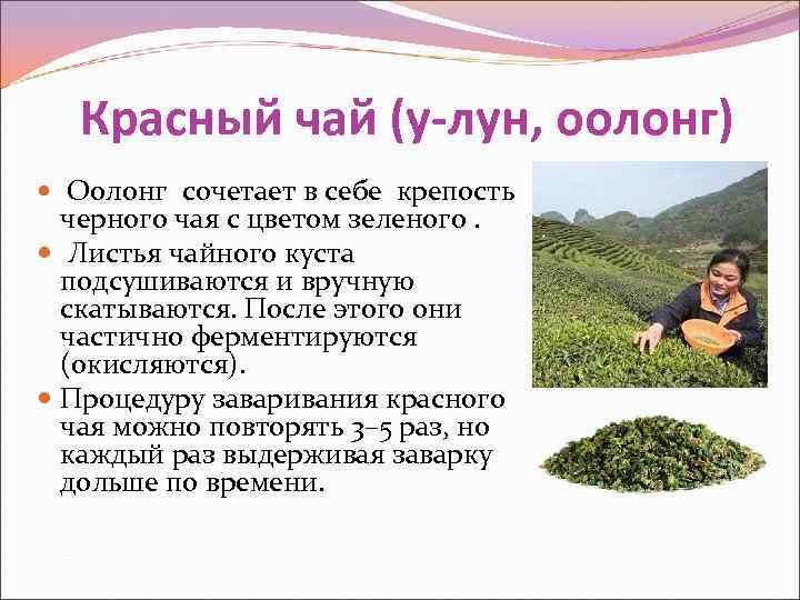 Красный чай (у-лун, оолонг)  Оолонг сочетает в себе крепость  черного