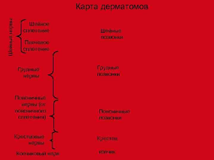 Шейные нервы       Карта дерматомов