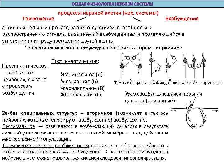 процессы нервной клетки (нер. системы)   Торможение