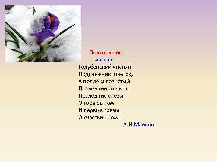 Подснежник   Апрель Голубенький чистый Подснежник: цветок, А подле сквозистый Последний